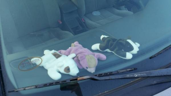 Person Leaves Five Dogs In Vehicle - Four Die