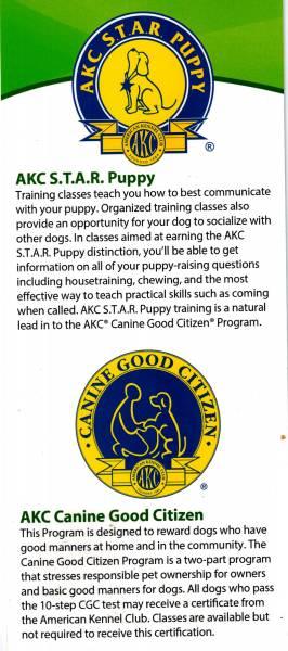 Lucky Dog Sports Club - Dog Training Classes