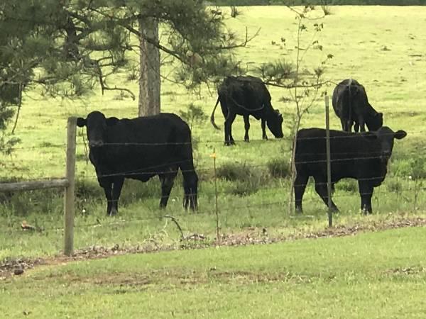 Livestock Market Report - Dothan Livestock and Auction