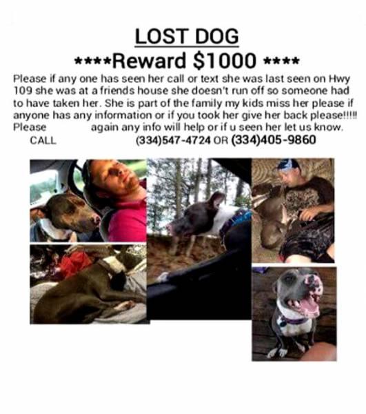 Lost - Reward Offered