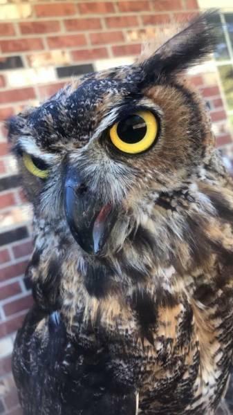 Owl Stolen from Truck
