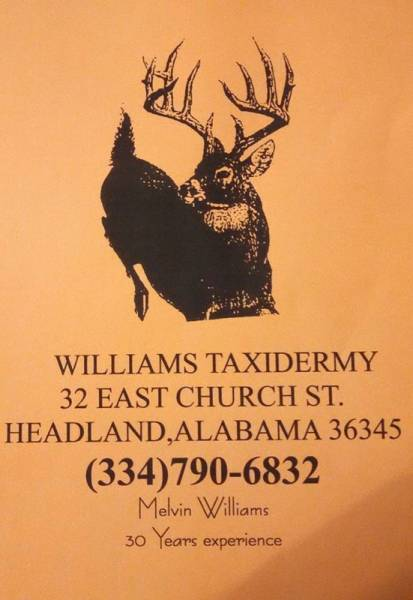 Williams Taxidermy on the Square in Headland