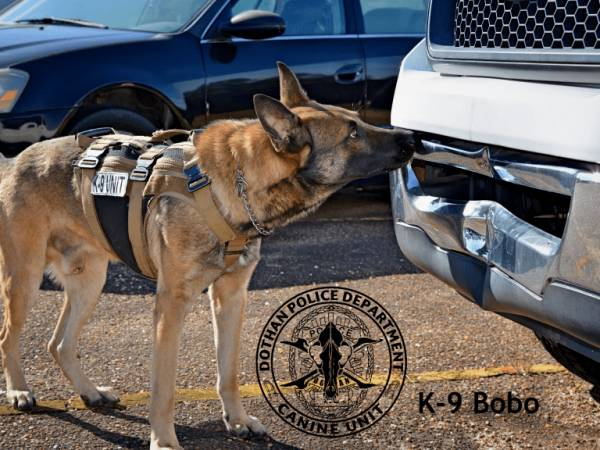 DPD K9 of the day Bobo