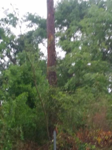 Lightening Strikes Tree and Home in Lovetown