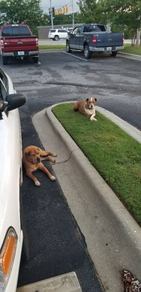 Two Dogs Found At Buffalo Wild Wings