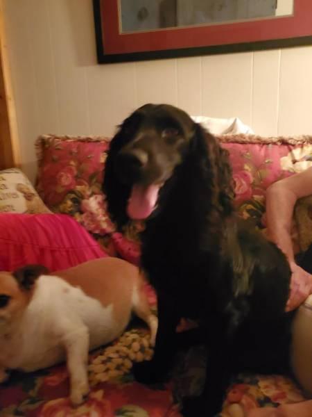 11:04 PM. Dog Found In Crestwood Village Off Fortner Street