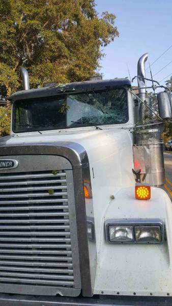 Tree Limb Busts Window Of Semi As Traveling Down The Road