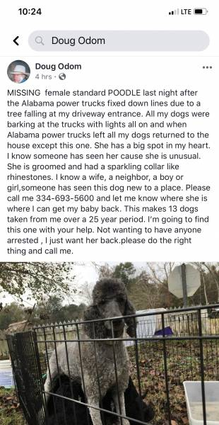 From a Reader - Please help find my uncle's dog!