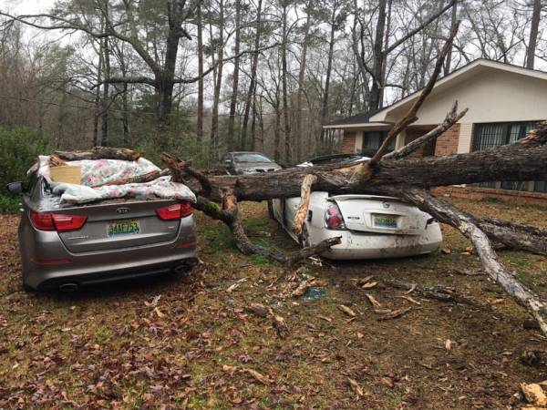 Wind Damage in Dale County