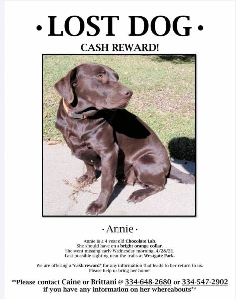 Missing Need Help Finding Annie