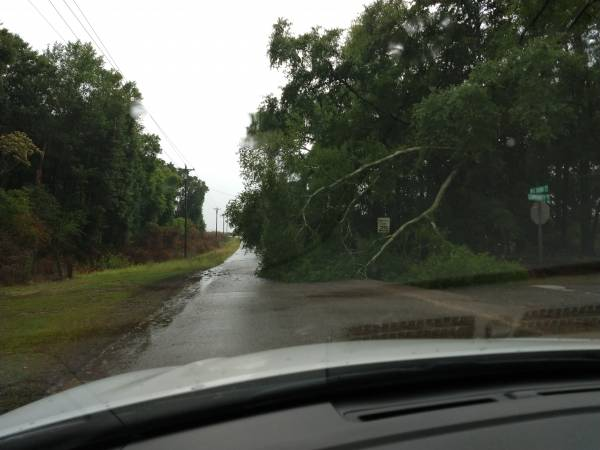 Trees down W.G. Bond and Community